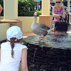 We headed into Port Douglas in the afternoon and went to the market where we first saw this duck. Later, after going to the supermarket, we saw it again, holding court in the fountain in the ...